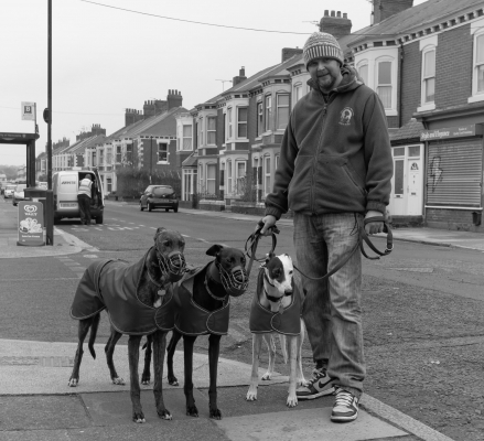 Three greyhounds in Heaton