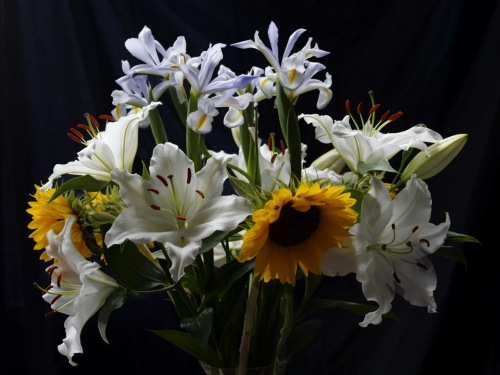 Sunflowers, lilies and irises
