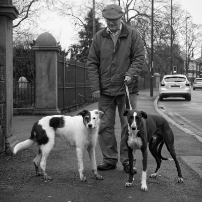 Two greyhounds on Heaton Road