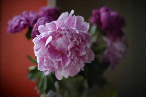 Peonies and a clout clash