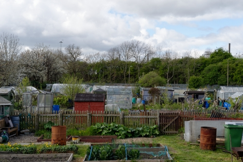 Benfield Road allotments